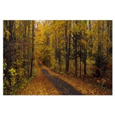 Road passing through a forest, Chestnut Ridge Coun