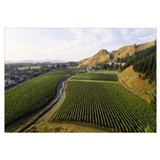 Mission Vineyard Hawkes Bay North Island New Zeala