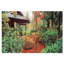 Plants in a garden, Japanese Tea Garden, Seattle,