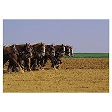 Plow Horses PA