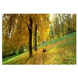 Autumn Scene Wurzburg Germany