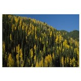 Fall Foliage Sangre de Cristos Mountains NM