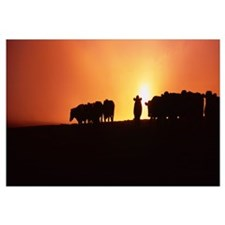 Silhouette of cows at sunset, Point Reyes National