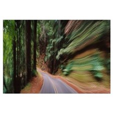 Road passing through a landscape, Marin County, Ca