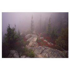 Trees covered with fog, Cadillac Mountain, Acadia