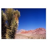 Plant in a desert, Red Rock Canyon National Conser