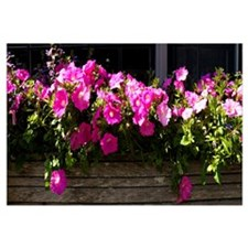 Flowers in a window box, Straight Wharf, Nantucket