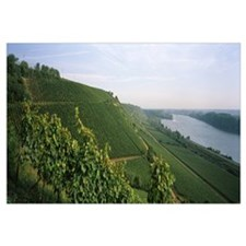 Vineyards along a river, Niersteiner Hang, Rhine R