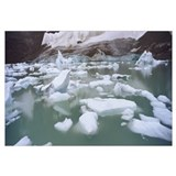 Ice floes floating in water, Angel Glacier, Mt Edi