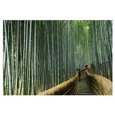 Stepped walkway passing through a bamboo forest, A