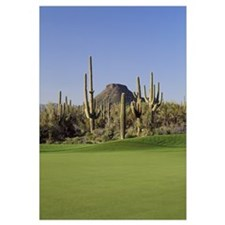 Saguaro cacti in a golf course, Troon North Golf C