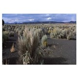 Plants on a landscape, Wupatki National Monument,