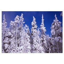Snow covered trees, Stratton Mountain Resort, Stra