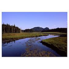Stream flowing through a landscape, Northeast Harb
