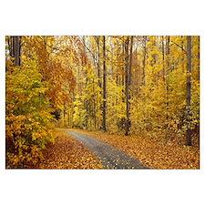 Road passing through autumn forest, Chestnut Ridge