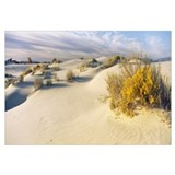 Desert plants in a desert White Sands National Mon
