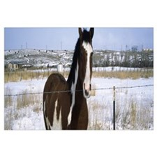 Horse at fence in snow Taos New Mexico