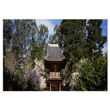 Cherry Blossom trees in a garden Japanese Tea Gard