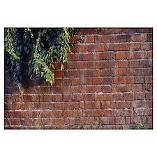 Brick Wall with Ivy UK