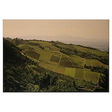 High angle view of vineyards, California