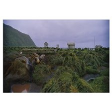 Sea Lions Macquarie Island Antarctica