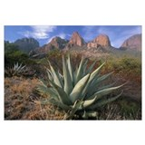 Chisos Agave and the Chisos Mountains, Big Bend Na