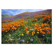 Wildflowers growing on hillside, spring, Antelope