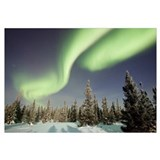 Northern lights or aurora borealis over boreal for