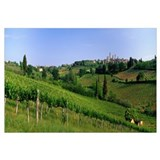 Vineyards and Medieval Town of San Gimignano Tusca
