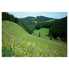 Wildflowers Black Forest Germany