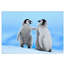 Emperor Penguin pair, Snow Hill Island, Antarctica