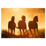 Domestic Horse (Equus caballus) trio running at su