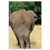 African Elephant (Loxodonta africana) mother with