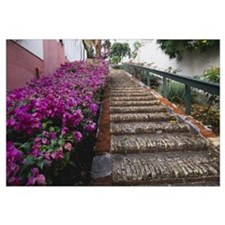 Step Street Charlotte Amalie St Thomas US Virgin I
