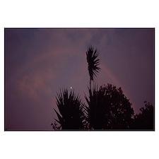 Rainbow behind palm trees at dusk, San Luis Valley