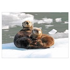 Sea Otter Female with cub on ice floe
