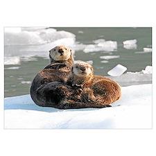 Sea Otter Female with cub on ice floe