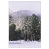 Trees on a snow covered landscape, El Capitan, Cal