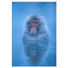 Japanese Macaque bathing in hot springs