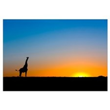 Giraffe silhouetted against the setting sun
