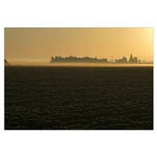 Layer of fog over soy bean field, Iowa
