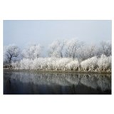 Hoarfrost-covered trees along Mississippi River, U