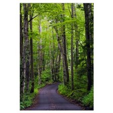 Roaring Fork Road winding through spring forest, G