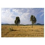 Turkey, Central Anatolia, wheat feild