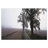 Small country road w/ trees in early morning fog W