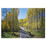 Winding road through aspen forest