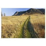 Tire tracks on a field, Columbia River Gorge Natio