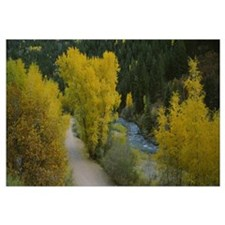 Dirt road along a river, San Miguel River, Colorad