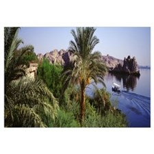 Palm trees at the coast, Aswan, Egypt