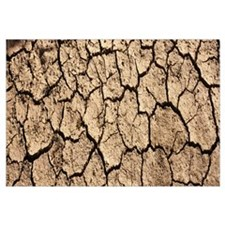 Cracked mud in a desert, San Benito County, Califo